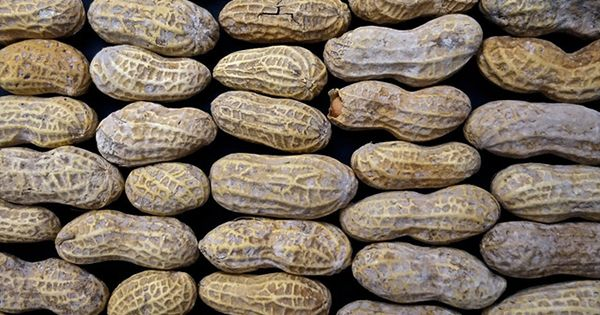 arašidy